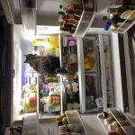 Cat in fridge | Direct Carpet Unlimited