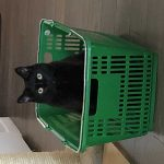 Cat in basket | Direct Carpet Unlimited