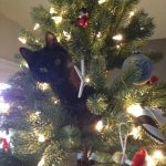 Cat in xmas tree | Direct Carpet Unlimited