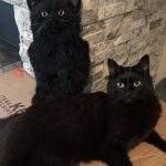 Black cats | Direct Carpet Unlimited