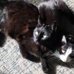 Black cats on Carpet | Direct Carpet Unlimited