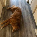 Dog on floor | Direct Carpet Unlimited
