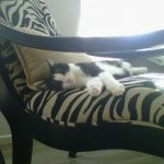 Cat on sofa | Direct Carpet Unlimited