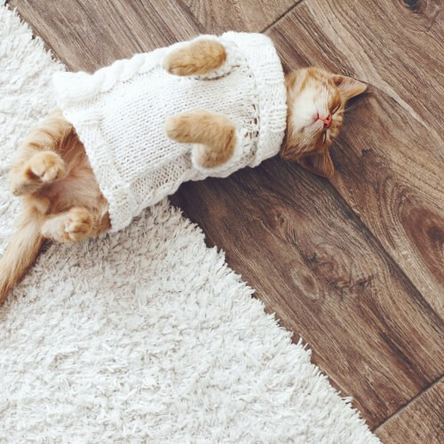 Pet friendly floor | Direct Carpet Unlimited