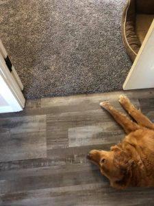 Pet friendly floor | Direct Carpet Unlimited