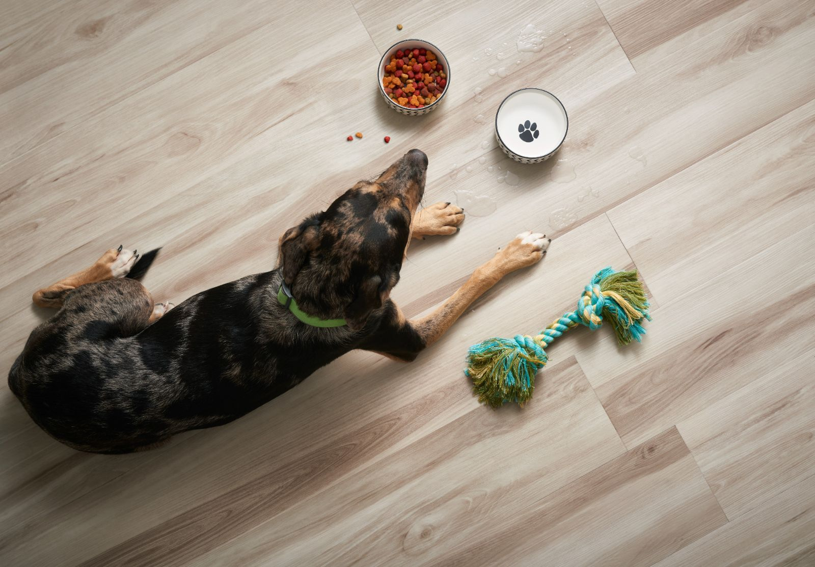 floorte-pro-flooring-waterproof-pet-friendly